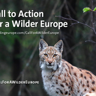 IUCN Member Rewilding Europe launches a call for action to drive forward rewilding in Europe