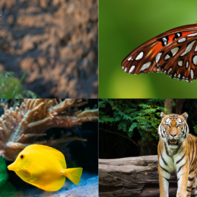 Report on the EU Biodiversity Strategy for 2030: an opportunity for Water and Biodiversity Conservation