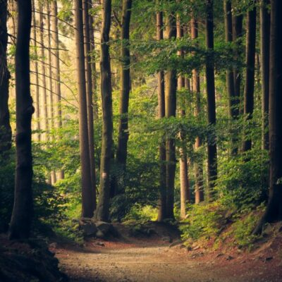 The European Commission step up new strategies to protect and restore EU forests