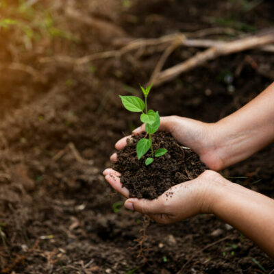 FAO launches practical tools to encourage soil organic carbon sequestration