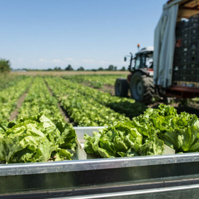European Green Deal: the Commission presents actions to boost organic production