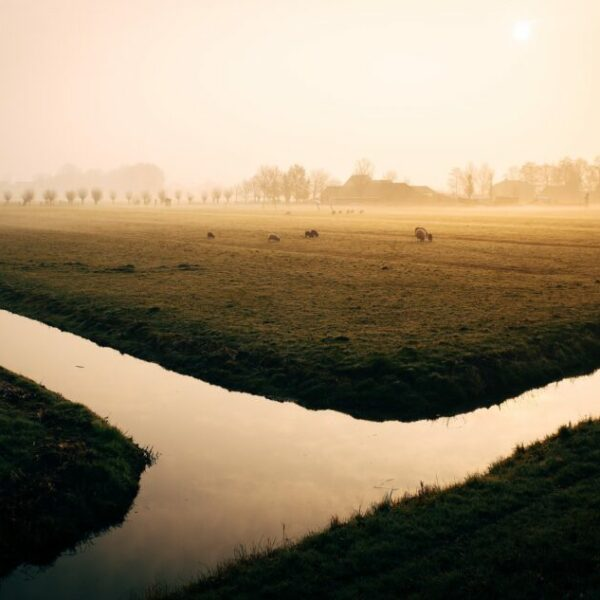 New ECA report shows how agriculture negatively impact the quantitative status of water